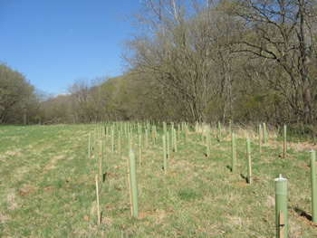 new trees at Antietam (2008)